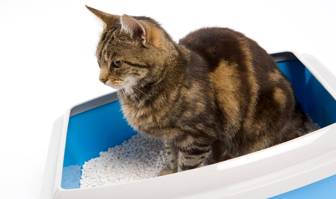 Cat litter: correct management of the litter tray