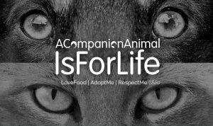 A Pet is For Life word A Companion Animal is for Life