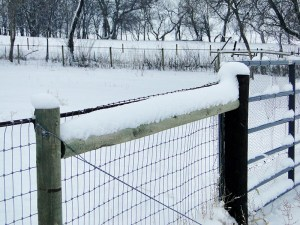 Snow on the Fence at Almosta Farm Highlands