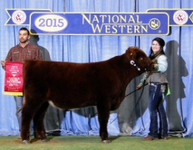 2015 Reserve Crossbred Prospect Steer Champion & Bailey McConnell