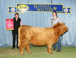 2016 Reserve Champion Senior Heifer Class