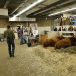 2012 Stock Show 86
