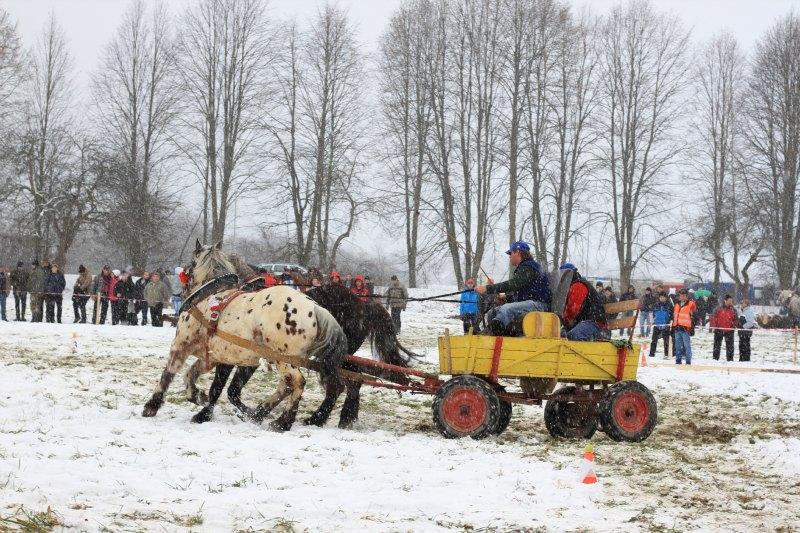 Wagon Slalom at Draft Horse Competition