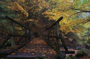 Fall leaves at Trangoska, on the way to Chata M.R.Štefánika, a chalet in the Low Tatra (Nizke Tatry) mountains of Slovakia - Almost Bananas