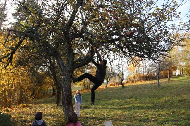 climbing an apple tree