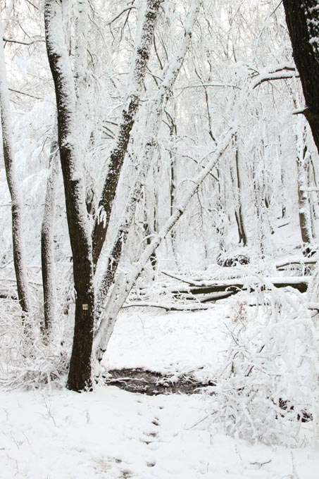 path through snowy forest, Slovakia