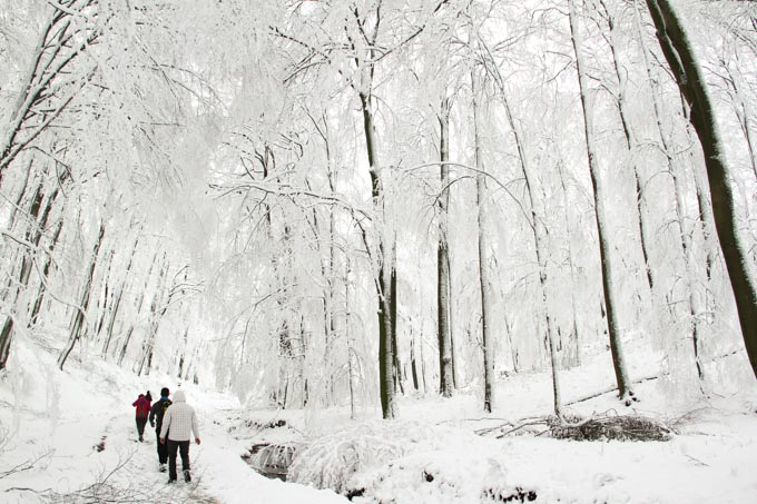 hiking in a snowy forest, Slovakia