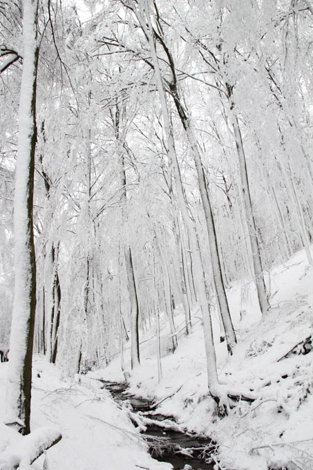 stream through snowy woods