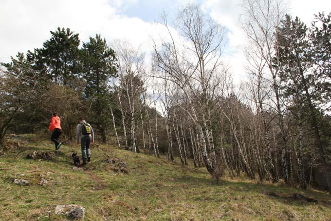 Hiking near birch trees