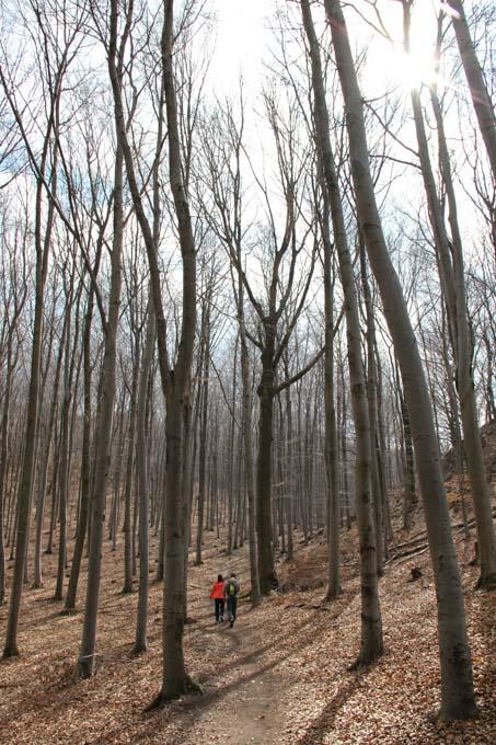 walking under oaks