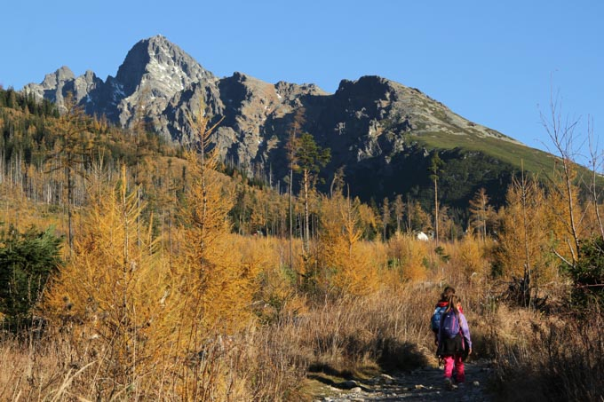 Hiking through orange larches in the fall with Lomnicky Stit ahead, from Stary Smokovec to Hrebienok in the High Tatra mountains of Slovakia