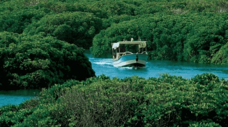 لماذا تستحق محمية جزر فرسان السعودية دخول اليونسكو؟