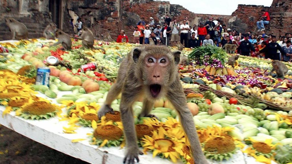 وليمة القرود في تايلاند
