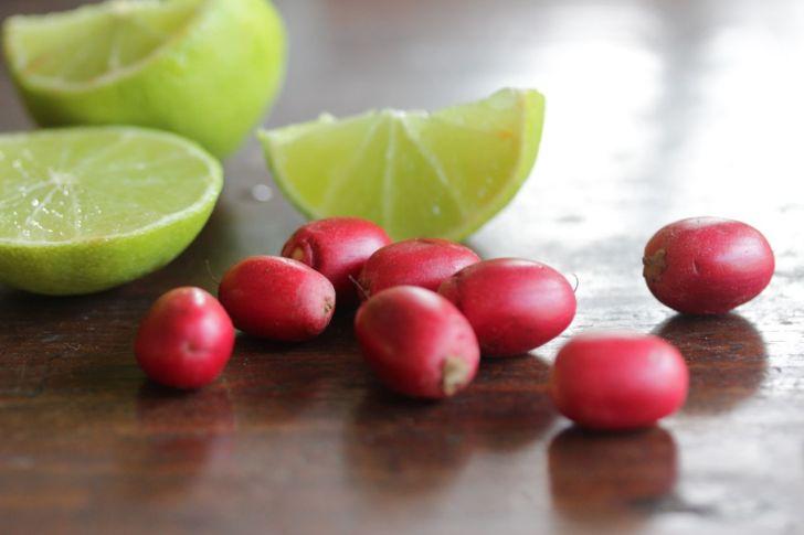 الفاكهة المعجزة Miracle Fruit