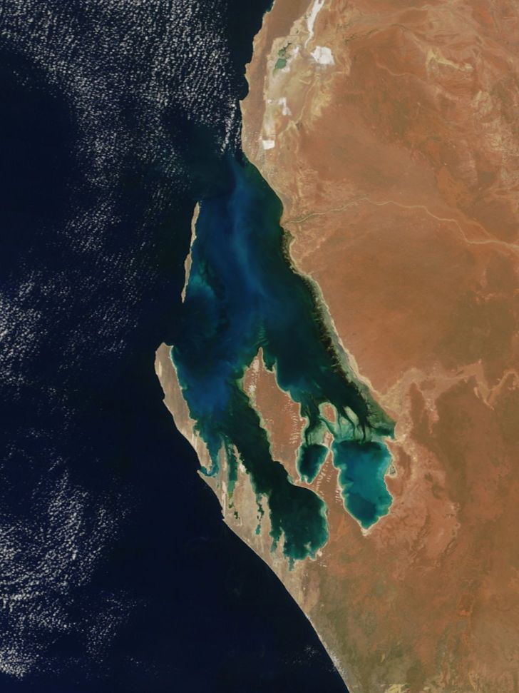 Shark Bay of Western Australia