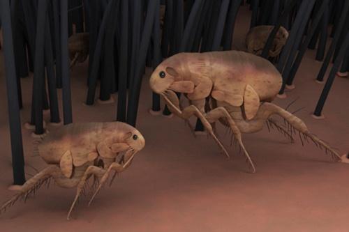 حشرات نقل العدوى