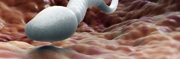 كيف تزيد كمية وكثافة السائل المنوي المرسال