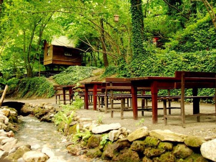 جانب من حديقة الطيور والنباتات في سبانجا