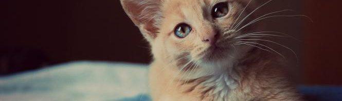 تفسير رؤية القطط في المنام لابن سيرين المرسال