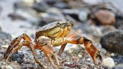 تفسير رؤيا لدغة سرطان البحر في المنام