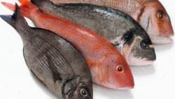 تفسير حلم اكل السمك في المنام