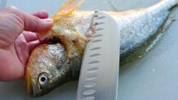 تنظيف السمك في المنام للمطلقة