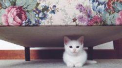 تفسير حلم قطة تحت السرير في المنام
