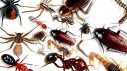تفسير حلم الحشرات الصغيرة