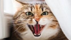 تفسير حلم القطط تهاجمني في المنام