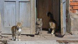 تفسير حلم إبعاد القطط في المنام