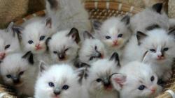 تفسير حلم القطط الكثيرة في المنام