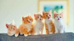 تفسير حلم القطط الصغيرة في المنام
