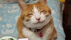 تفسير حلم قطة تتكلم معي في المنام