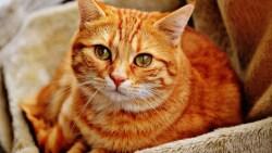تفسير حلم قطة لونها برتقالي في المنام