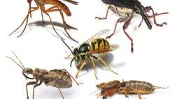 تفسير حلم قتل الحشرات في المنام