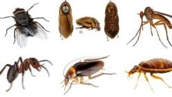 تفسير حلم الحشرات الطائرة في المنام