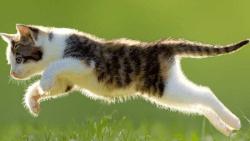 تفسير حلم قطة تلاحقني في المنام