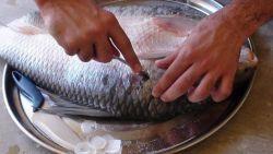 تنظيف السمك النيء في الحلم