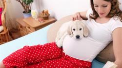 تفسير حلم الكلب في المنام للحامل