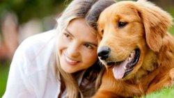 تفسير حلم الكلب في المنام للعزباء