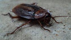 تفسير حلم الصراصير السوداء في المنام