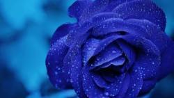 تفسير حلم اللون الأزرق في المنام