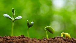 تفسير حلم الزراعة في المنام للرجل المتزوج