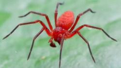 تفسير حلم العنكبوت الأحمر في المنام