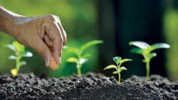 تفسير حلم الزراعة في المنام للنابلسي