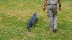 تفسير حلم رؤية التمساح في البيت في المنام