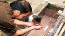 تفسير حلم سقي الماء للحيوانات في المنام