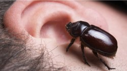 تفسير حلم خروج الصرصور من الأذن في المنام