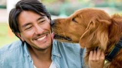 تفسير حلم الكلب في المنام الرجل المتزوج