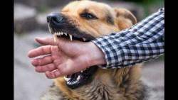 تفسير حلم عضة الكلب من كف اليد في المنام